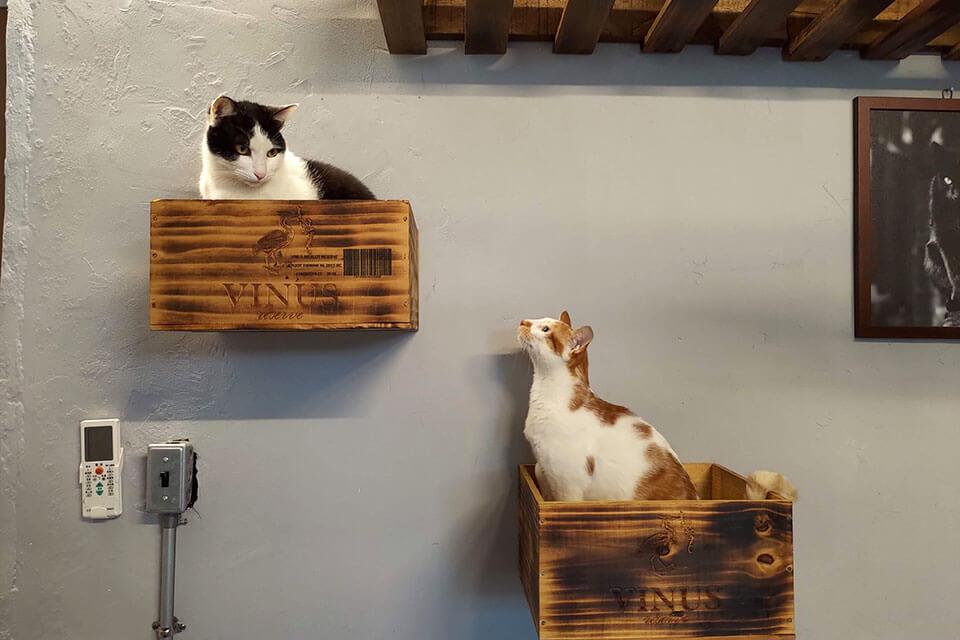 彰化市下午茶店 - 南園食堂貓咪們